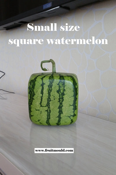 Square shape watermelon mold  (15cm size with free shipping)