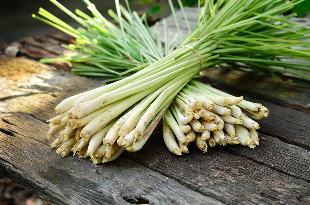 Lemongrass - 100g Bunch