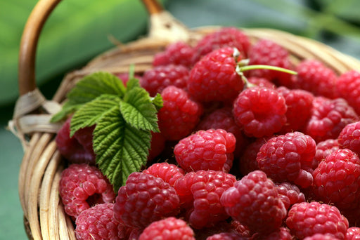 Raspberries - 125g Punnet