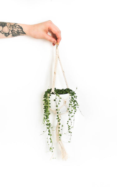 Mini Plant Hanger with 24K Gold Plated Beads