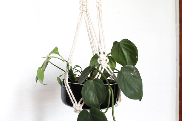 Forget Me Knot Plant Hanger - Extra Long