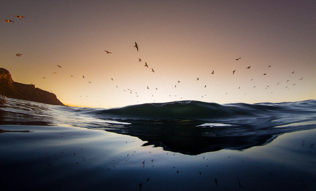 Birds flying over a wave at sunset