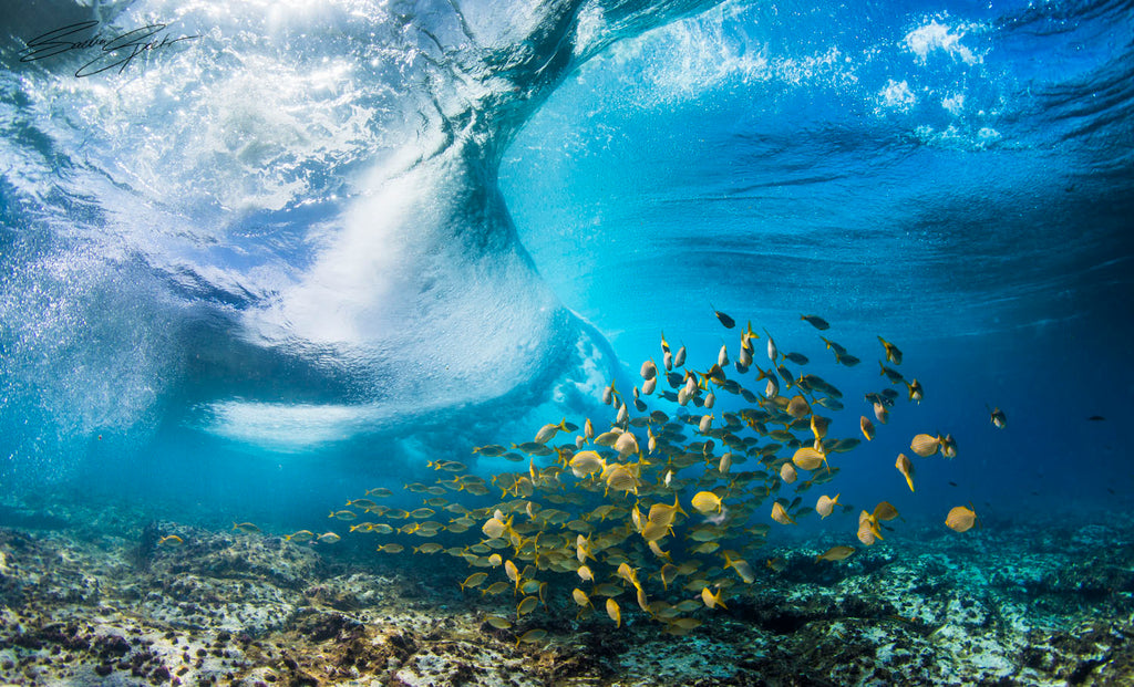 Wave photographed from underwater with coral reef and fish