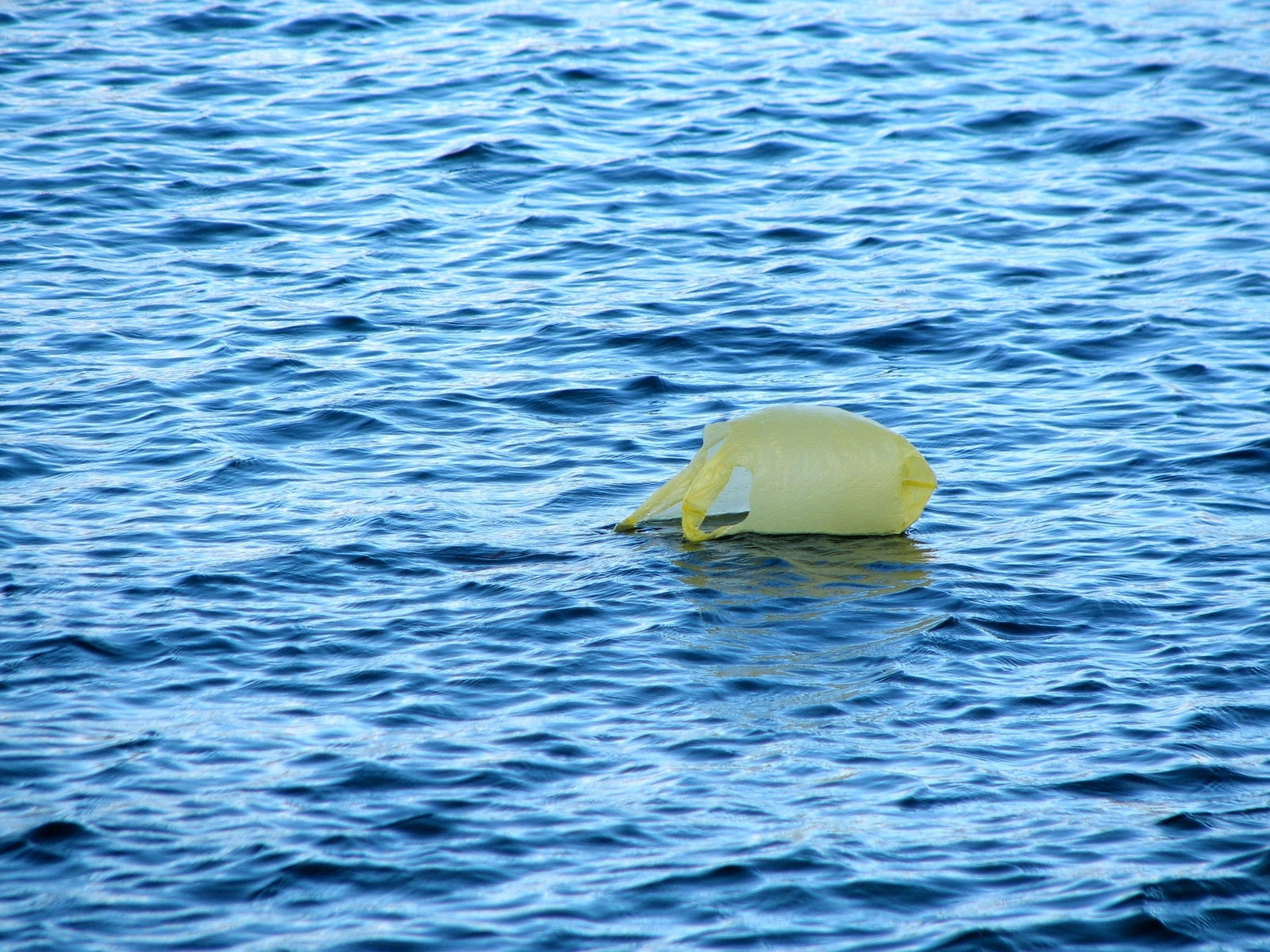 Plastic packet floating in the ocean