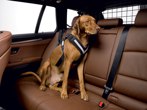 The Original AllSafe Harness Dog Seat Belt