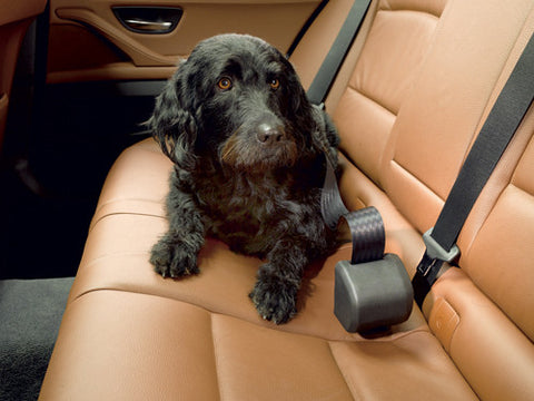 Click N Roll Dog Seat Belt