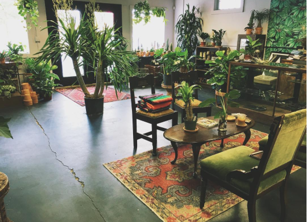 HOUSEPLANTS 101! with Candice of THE FOX DEN
