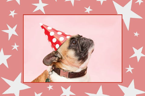 Birthday Pooch Postcard