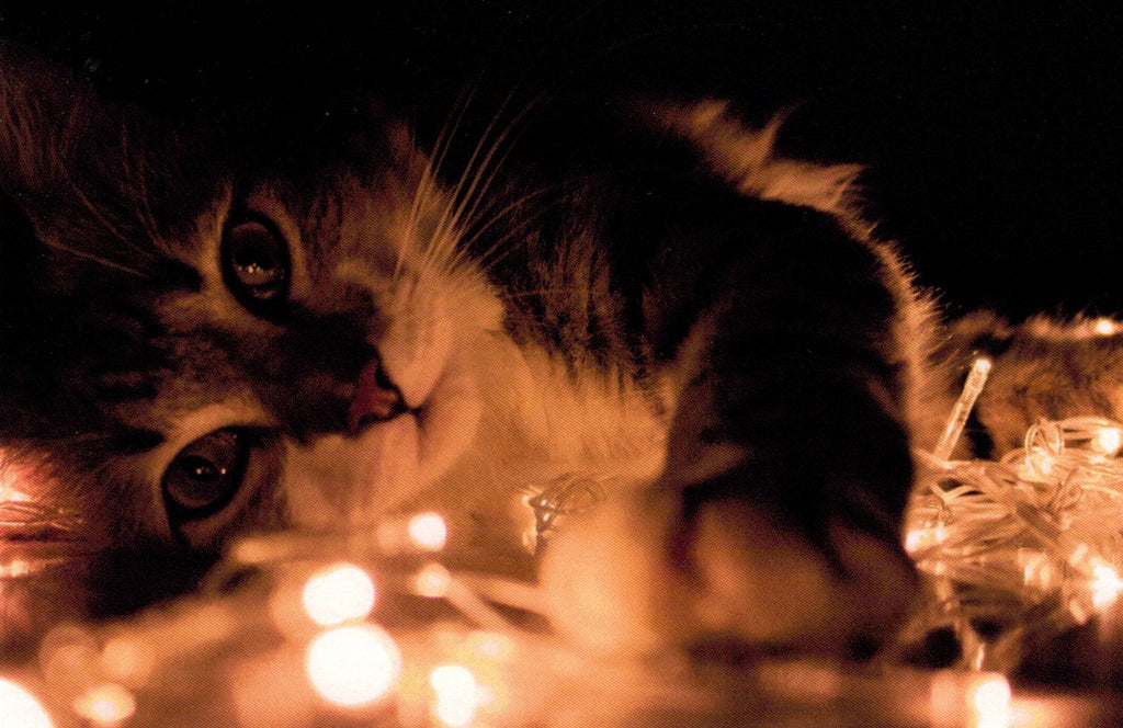 Lit Up Kitty Postcard