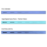 ECL Extended Western Blot Chemiluminescent Substrate