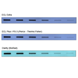 ECL Extra Western Blot Chemiluminescent Substrate