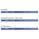ECL Extreme Western Blot Chemiluminescent Substrate
