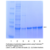 PROTEINDEX™ Ni-Penta™ Agarose 6 Fast Flow, Chemical Stable, Prepacked Cartridge
