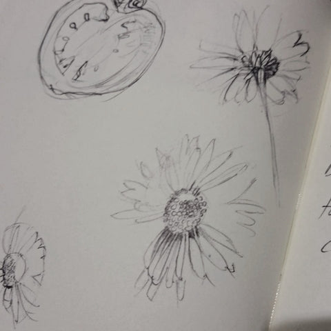 Daisy sketches:) Paintings Art & Illustration