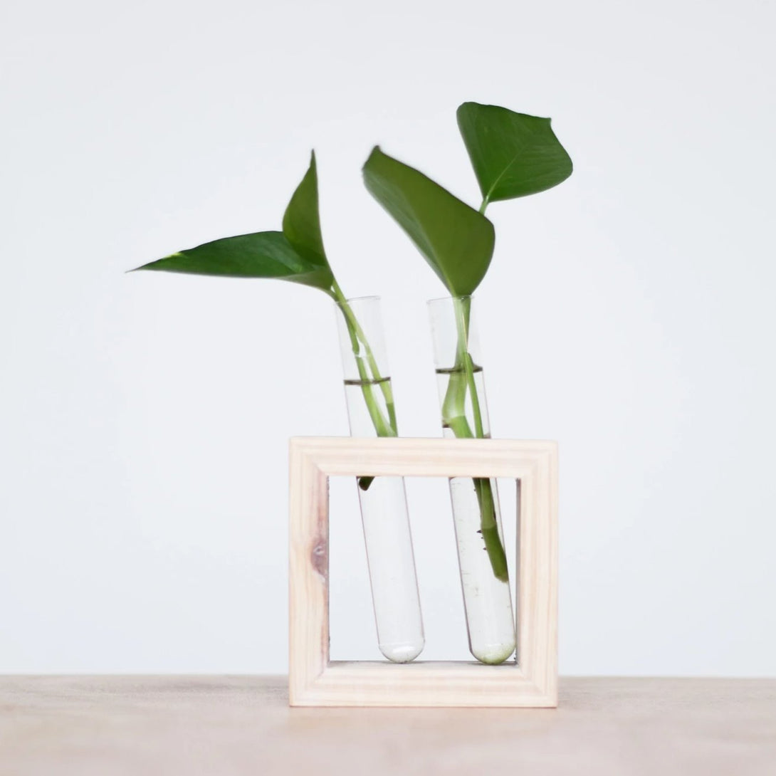 Test Tube Planters