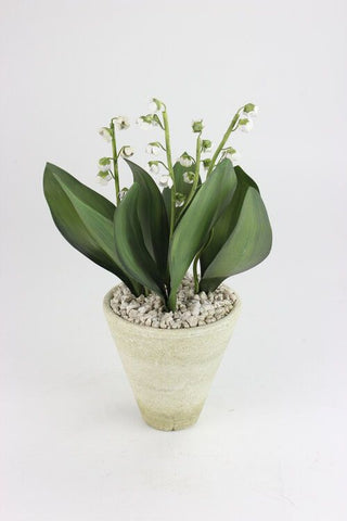 Lily of the Valley in Terracotta Pot