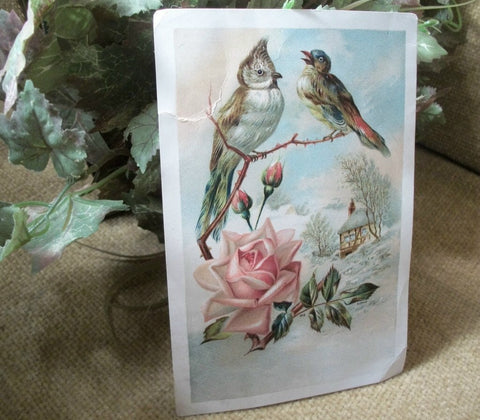Antique Picture Card 1890's Lion Coffee Woolson Spice Co Advertising  Paper Ephemera Winter Birds Pink Roses Papercrafts Decoupage Supply