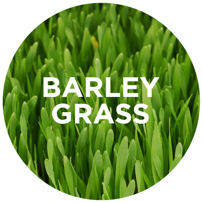 Purely Learn: Barley Grass
