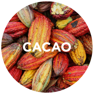 Purely Learn: Cacao