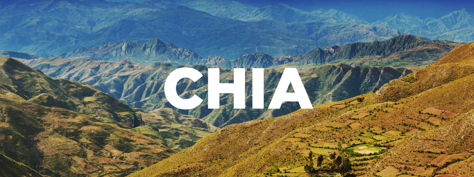 Chia growing in the mountains of Bolivia, South America.