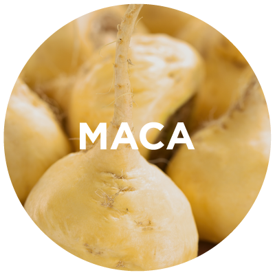 Purely Learn: Maca