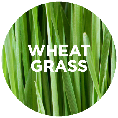 Purely Learn: Wheat Grass