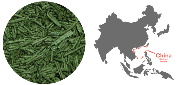 Spirulina from the South China Sea.