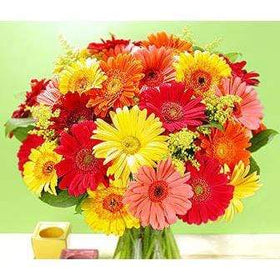 Blooms N Roses Flowers & Gifts Flowers Gerbera Rainbow of Colours
