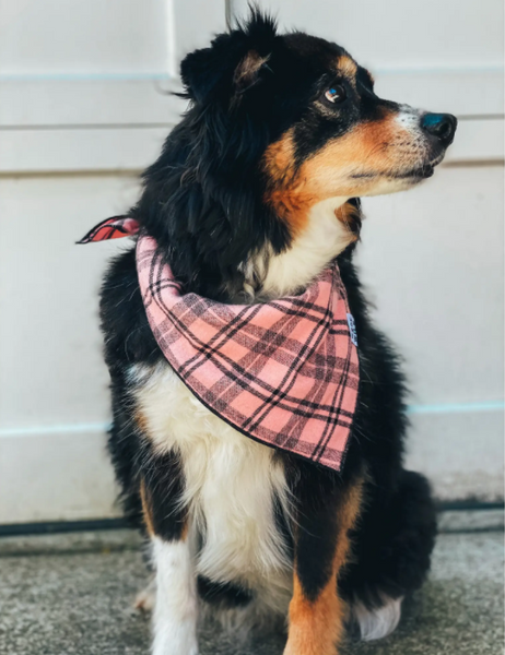 Dog Bandana -- Dusty (Large)
