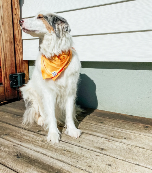 Dog Bandana -- Sol (Small)
