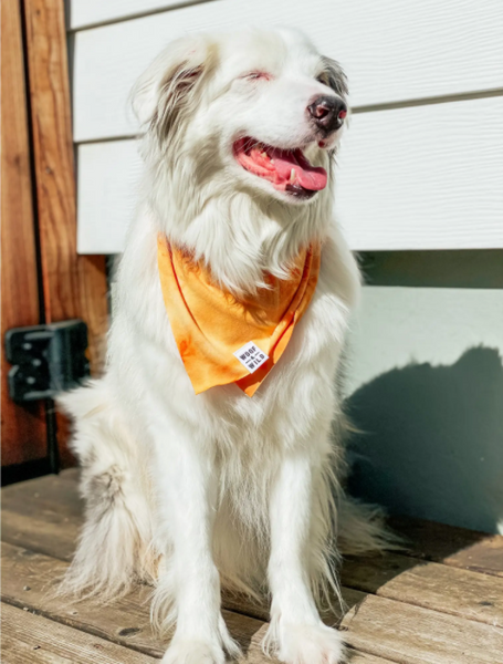 Dog Bandana -- Sol (Large)