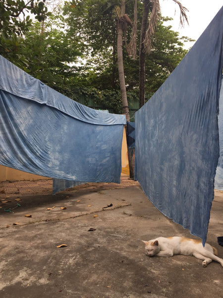 fabric naturally dyed with indigo hanging to dry