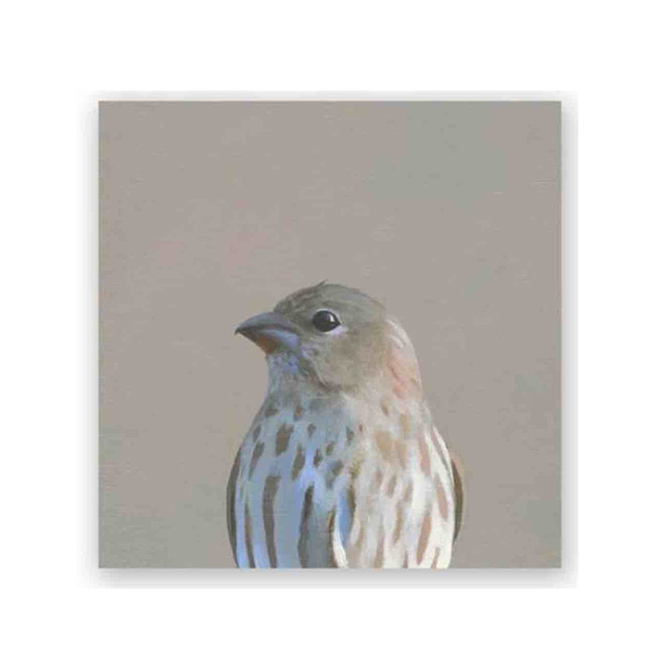 6x6 house finch