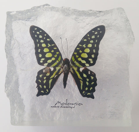 Butterfly Acrylic