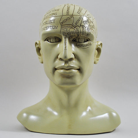 Phrenology Head Sculpture by Tina Tarrant - Prezents  - 1