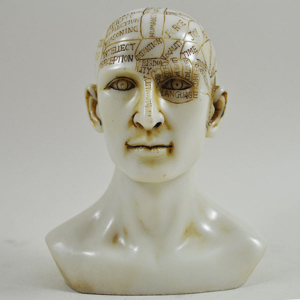 Phrenology Head Sculpture - Prezents.com