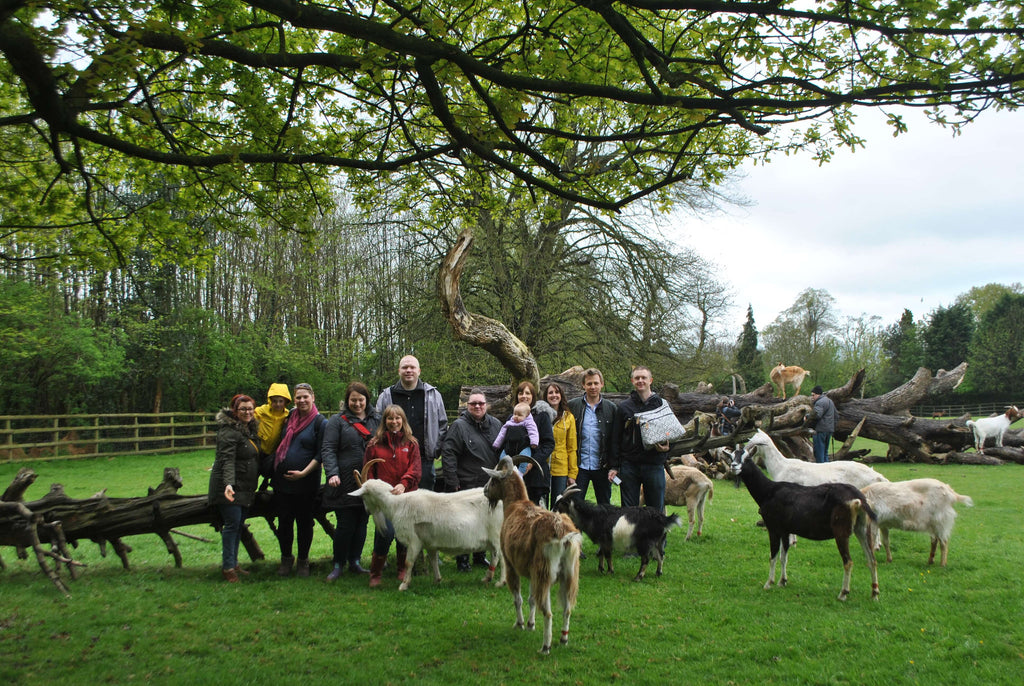 Our Donation - Buttercups Sanctuary For Goats - Maidstone, Kent