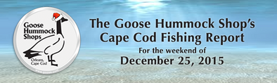 The Cape Cod Fishing Report for 12/23/15