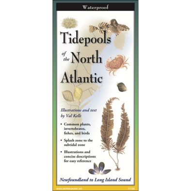 TIDEPOOLS OF THE NORTH ATLANTIC FOLDING GUIDE