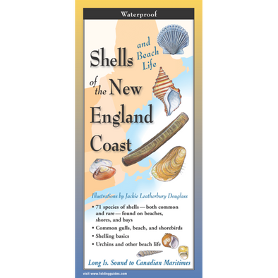 SHELLS OF NEW ENGLAND COAST FOLDING GUIDE