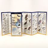BIRDS OF NEW ENGLAND COAST FOLDING GUIDE