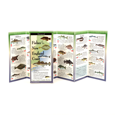 FISHES OF NEW ENGLAND COAST FOLDING GUIDE