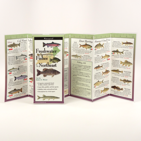 FRESHWATER FISHES OF NEW ENGLAND FOLDING GUIDE