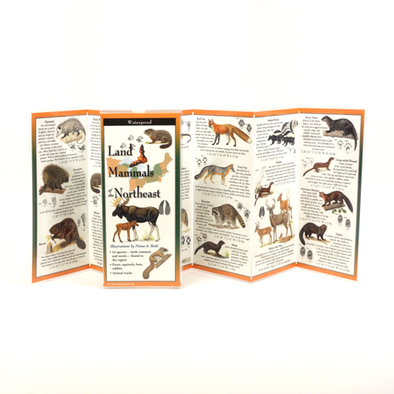 LAND MAMMALS OF THE NORTHEAST FOLDING GUIDE
