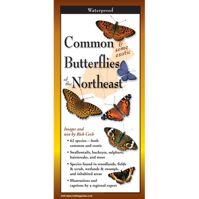 COMMON BUTTERFLIES OF NORTH EAST FOLDING GUIDE