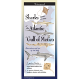 SHARKS/SKATES/RAYS OF THE ATLANTIC & GULF OF MEXICO FOLDING GUIDE
