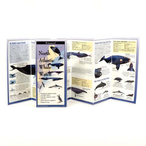 NORTH ATLANTIC WHALE WATCH FOLDING GUIDE