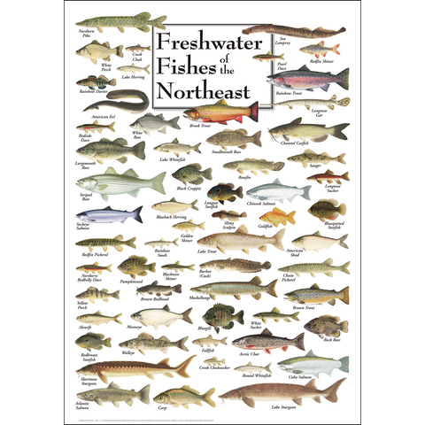 FRESHWATER FISHES OF THE NORTHEAST POSTER