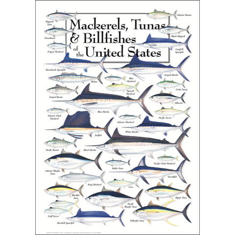 MACKERELS, TUNAS & BILLFISHES POSTER