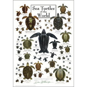 SEA TURTLES OF THE WORLD POSTER
